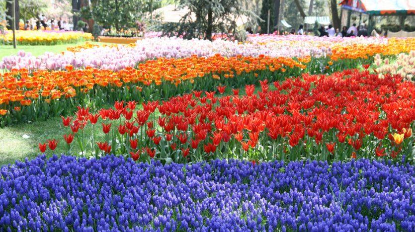 emirgan tulip garden istanbul