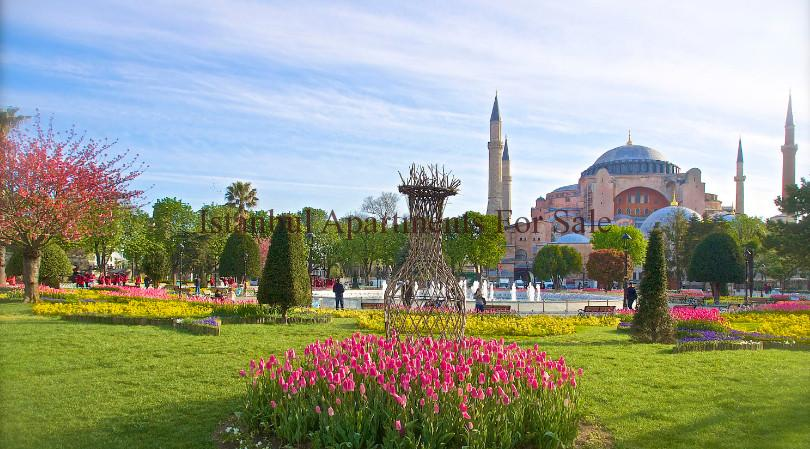 tulips from istanbul